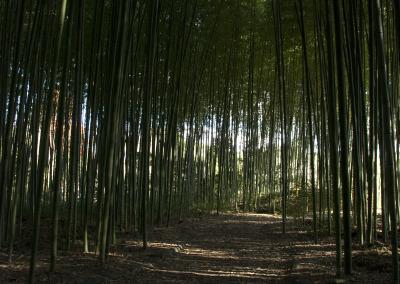 嵯峨の竹林