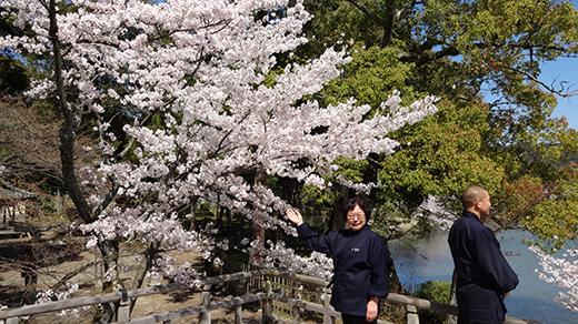 桜花爛漫3