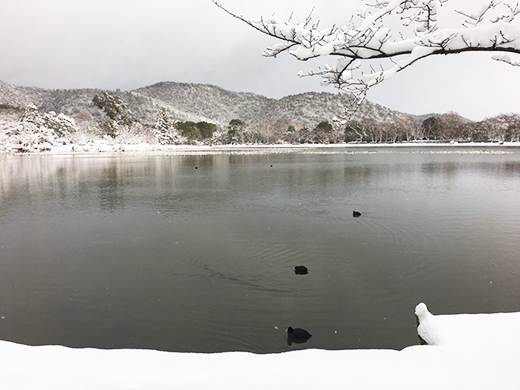 大沢池 雪