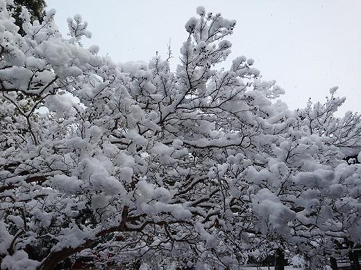 雪 百日紅