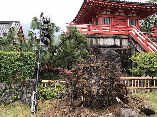 心経宝塔前の倒木